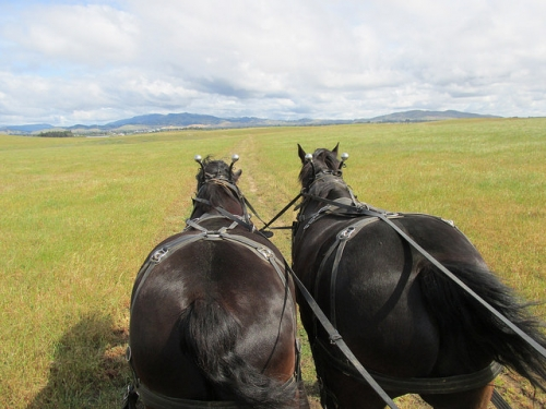 horse drawn carriage, Access Adventure, Rush Ranch, Solano