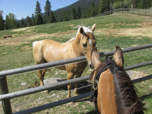 Triple Creek Ranch, horses