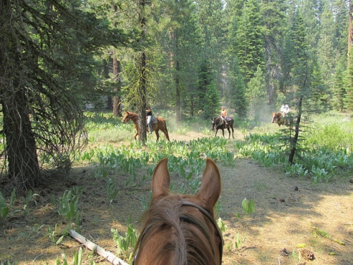 Alpine Meadows Stables, horseback riding, Lake Tahoe