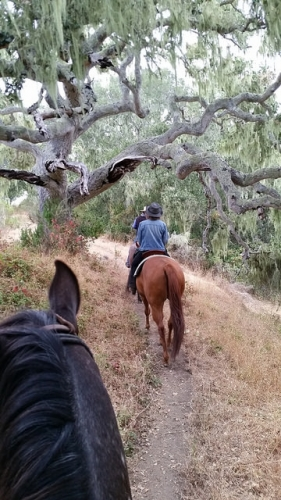 carmel valley horseback riding, carmel valley ranch, carmel valley trail rides