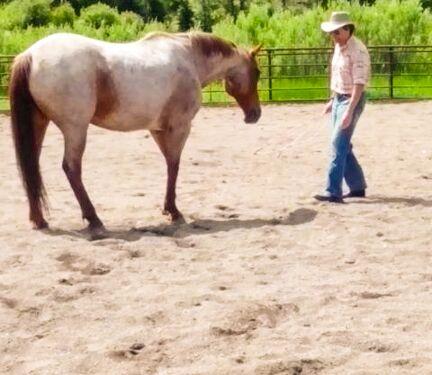 mark rush, 4ur ranch, natural horsemanship, horse