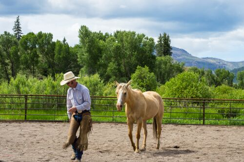 Damon Gibbons, natural horsemanship, colorado