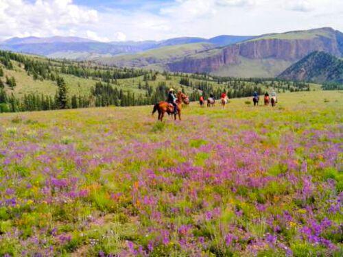 wildflowers, horses, 4ur ranch