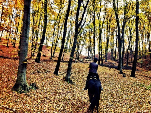 horse riding, transylvanian forest, horse riding Transylvania