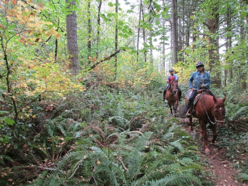 horseback riding, oregon, portland