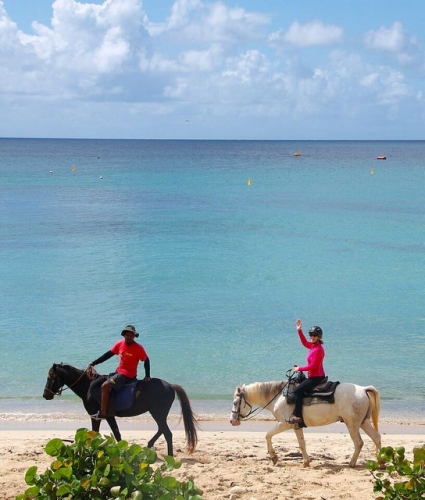 nancy d brown, nancy brown, horseback riding vacation, caribbean