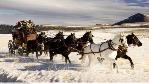 hateful eight, stagecoach, horses