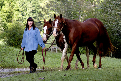 cathy woods, yoga on horseback, body mind equine