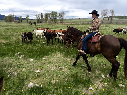 cowgirl, the resort at paws up, cattle drive, paws up, horseback riding, missoula, montana