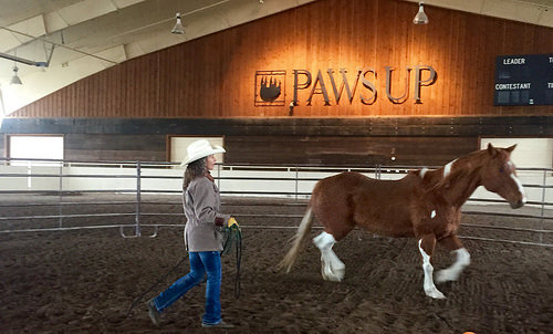 Stact Westfall, horsemanship, horse trainer, the resort at paws up, horse