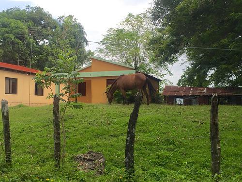 horse, cupey, puerto plata, dominican republic