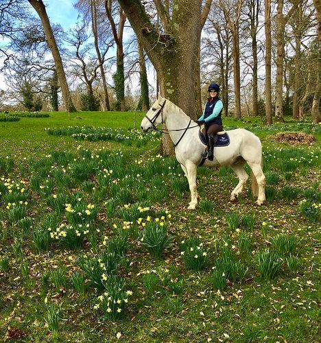 nancy d brown, mount juliet horse riding, mount juliet equestrian centre, horse riding kilkenny