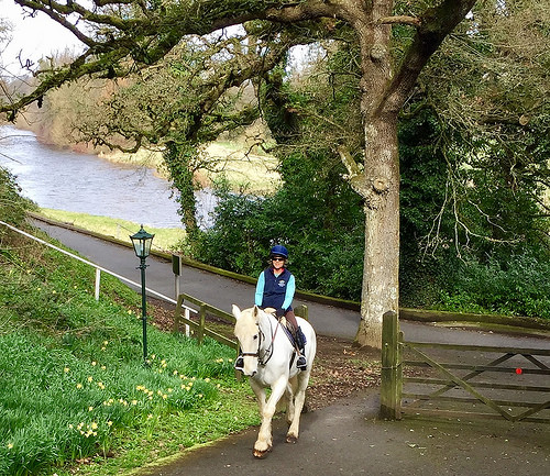 horse riding kilkenny, equestrian holiday ireland, horse riding mount juliet, nancy d brown