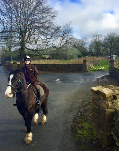 ballyhannon equestrian center, irish cob, horse trekking, nancy d. brown, horse riding county clare, horse riding ireland