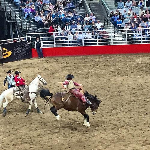 san antonio rodeo, san antonio rodeo & stock show, horse, cowboy, texas, saddle bronc rider