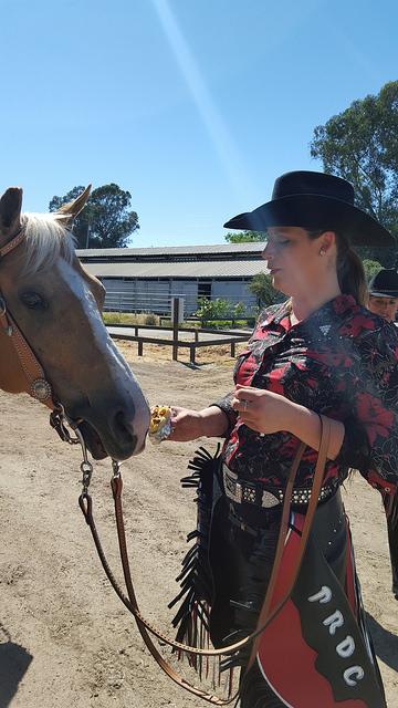 christine shepherd, petaluma riding and driving club, palomino horse, equestrian, cowgirl